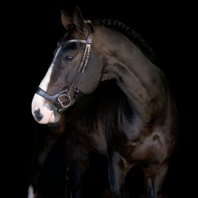 ps of sweden pioneed bridle new zealand australia